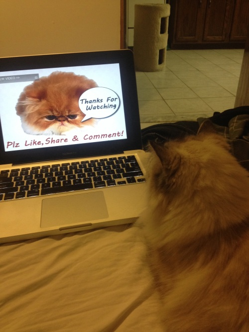 They watch cat videos.