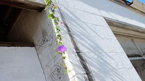 sun hanging on vines